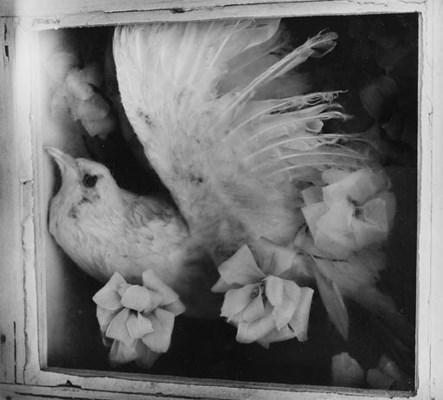 CLARENCE JOHN LAUGHLIN (1905-1
