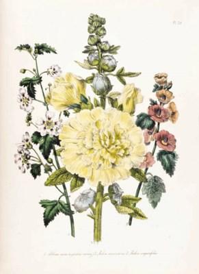 CURTIS, William.  The Botanica