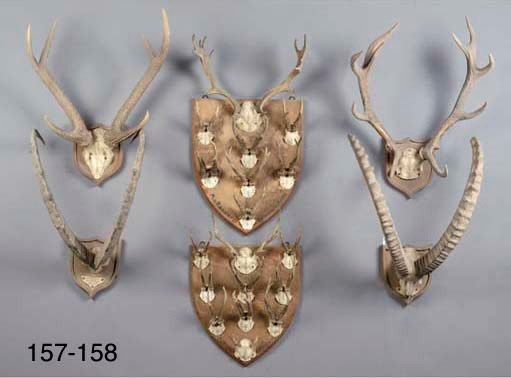 A lot of two deer antlers and