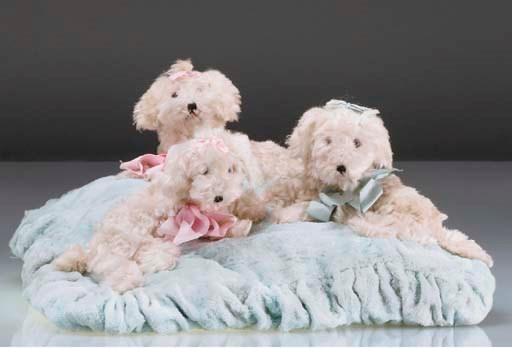 Three poodles on a cushion nig