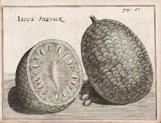 MEISTER, George (1653-1713). D