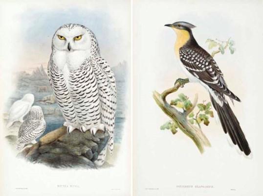 GOULD, John. The Birds of Grea