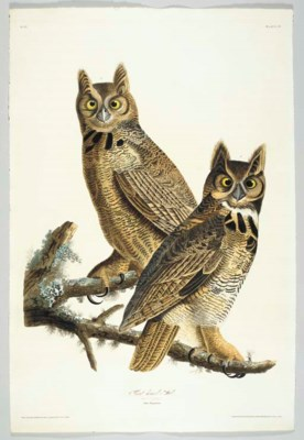 Great horned-Owl (Plate 61) Gr