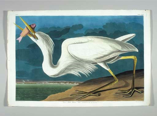 Great White Heron... View Key-
