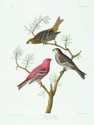 Pine Grosbeak (Plate CCCLVIII)