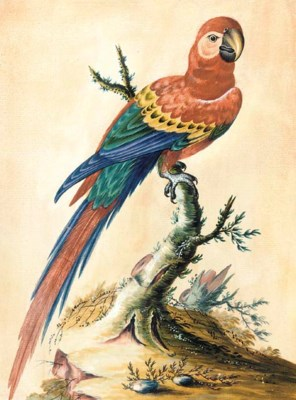 A study of a parrot on a branc