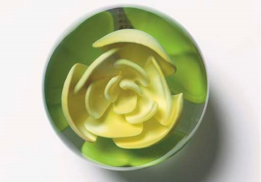 A MILLVILLE-TYPE YELLOW ROSE P