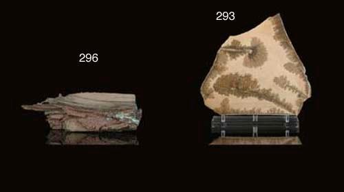 A Large Dendritic Limestone Sl