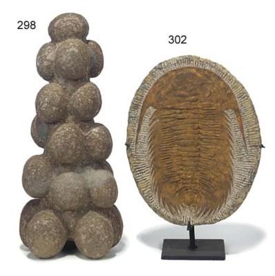 A trilobite fossil