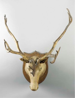 A Canadian elk's head trophy