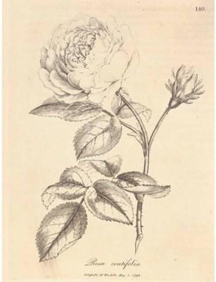 WOODVILLE, William (1752-1805)