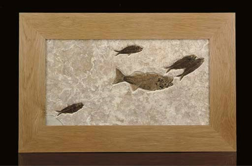 A good fossil fish plaque,