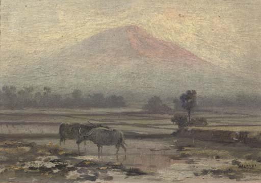 Water buffaloes in a sawah landscape