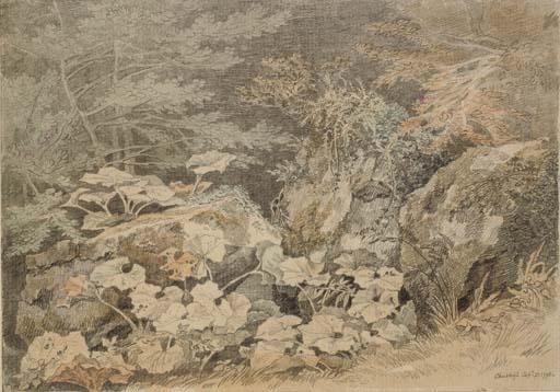 A study of undergrowth at Chudleigh, Devon