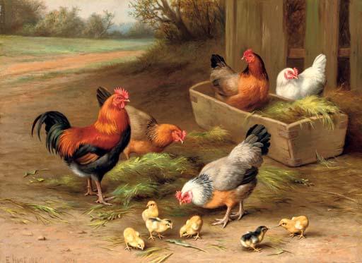 Farmyard chickens