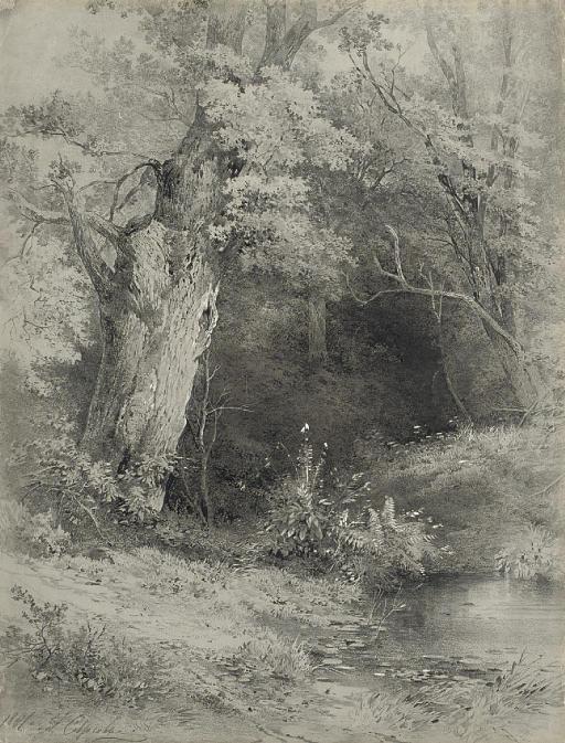 A riverbank