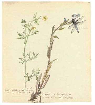 FLORILEGIUM--A botanical album