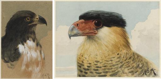 A Peregrine Falcon; An Imperial Eagle