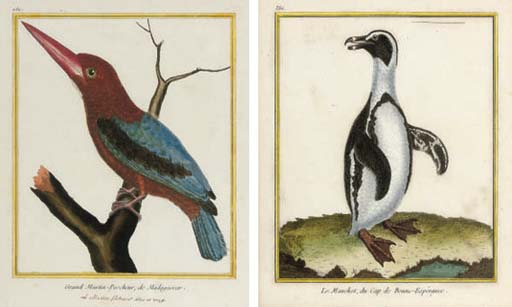 A collection of Ornithological studies