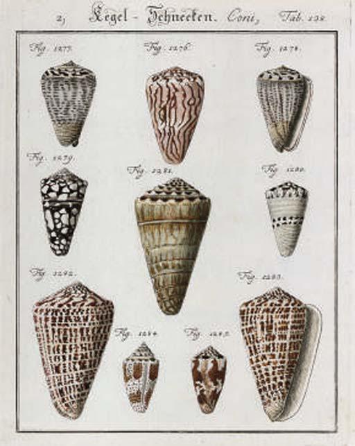 Studies of Shells