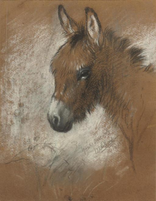 Study of a favourite donkey