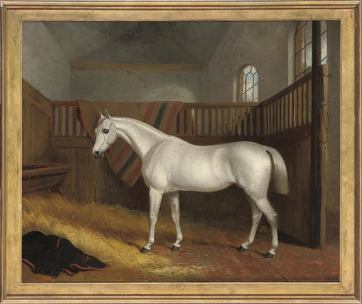A grey hunter in a stable