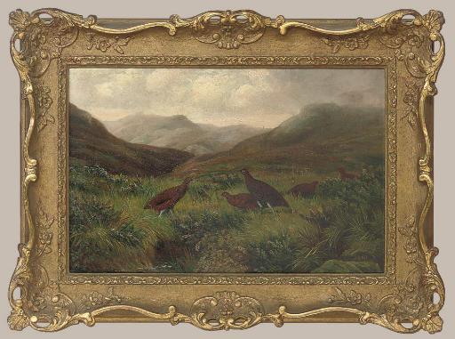Grouse in a misty highland landscape