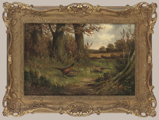 Pheasants in a woodland clearing
