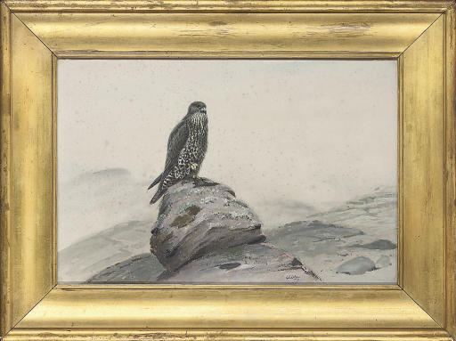 Peregrine falcon on a rocky outcrop