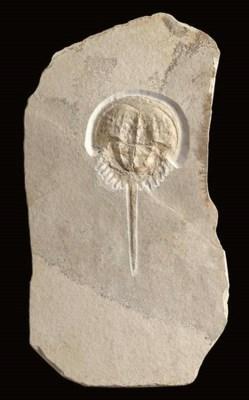 A limestone king crab plaque,