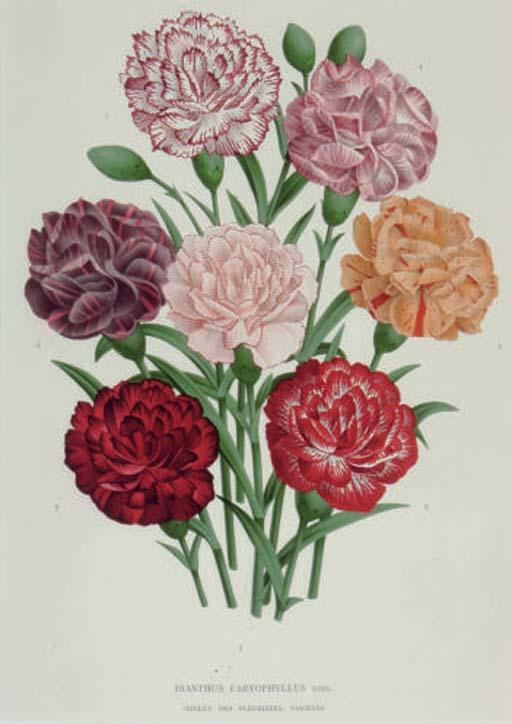 L'Illustration Horticole: Six Plates