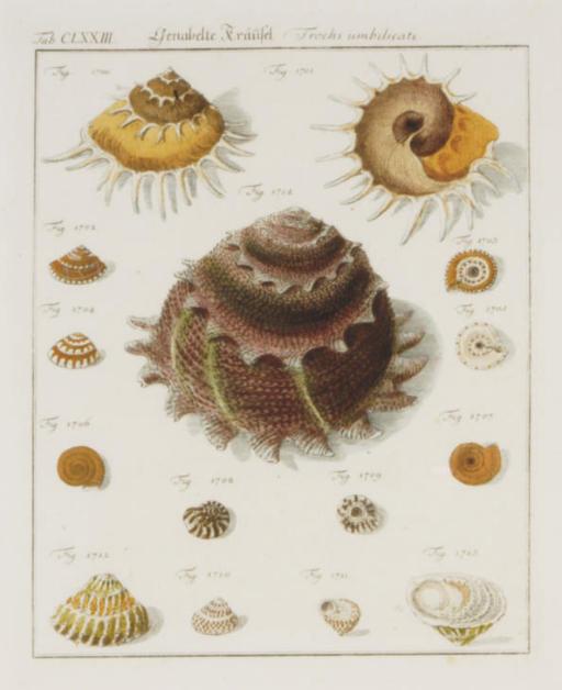 [Shell studies]: Six Plates