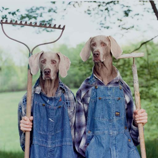 Farm days et Hay