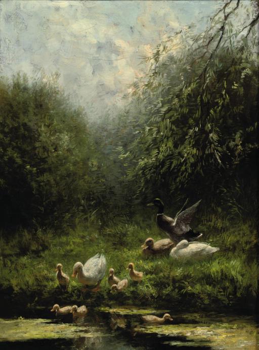 Ducks entering the pond