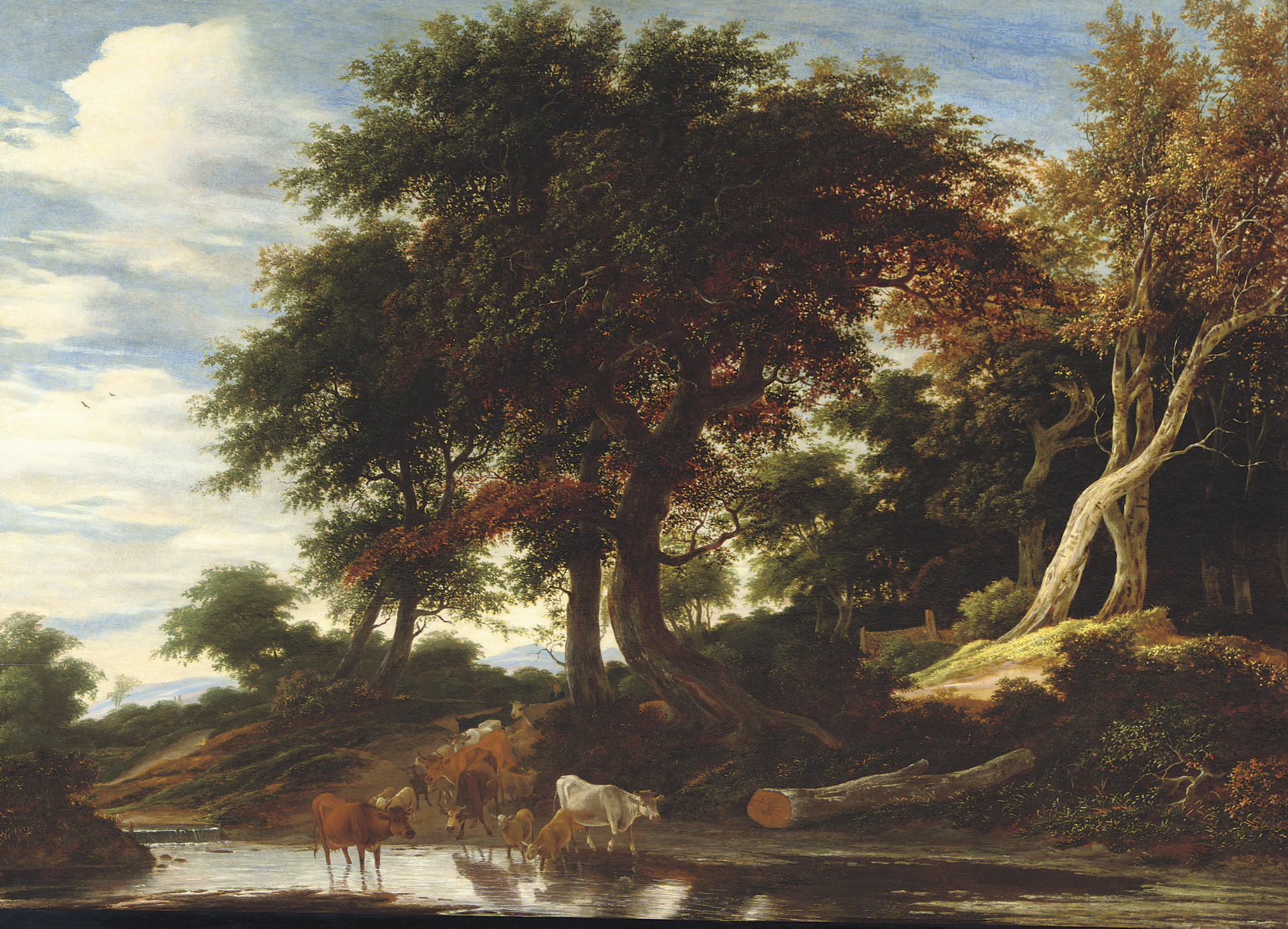 Cattle fording a stream in a wooded landscape