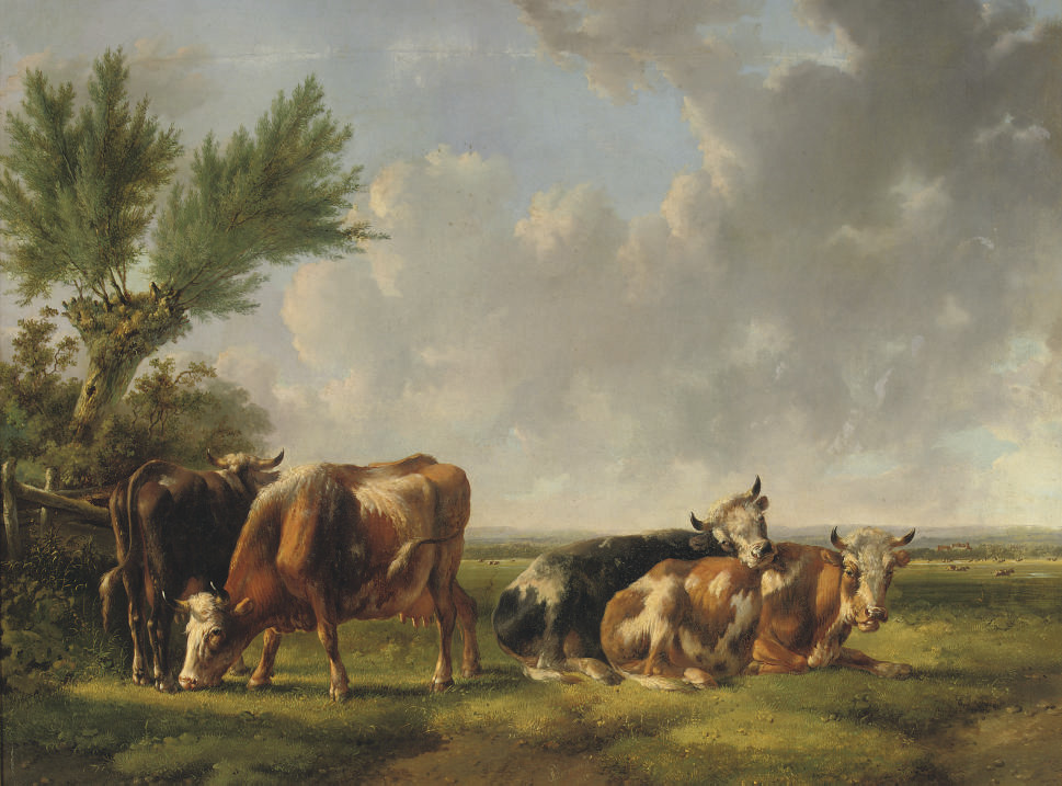 Cattle resting in the meadow