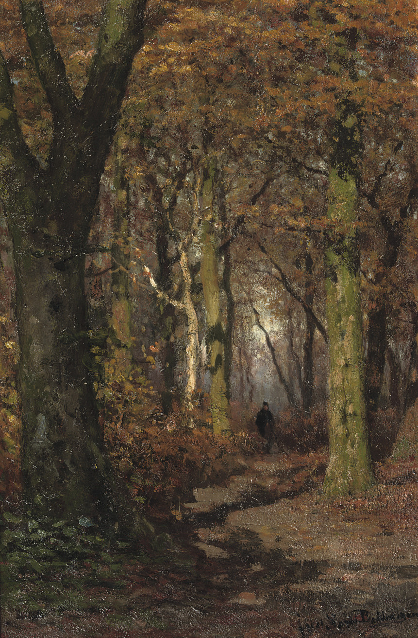 Wandering through a forest in autumn