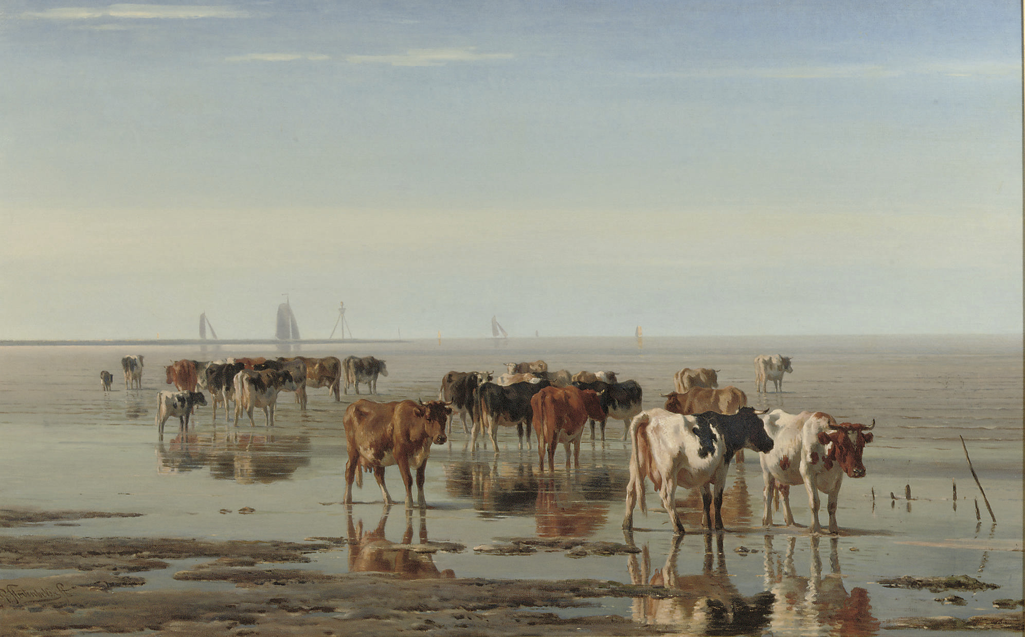 Cattle on the beach at low tide