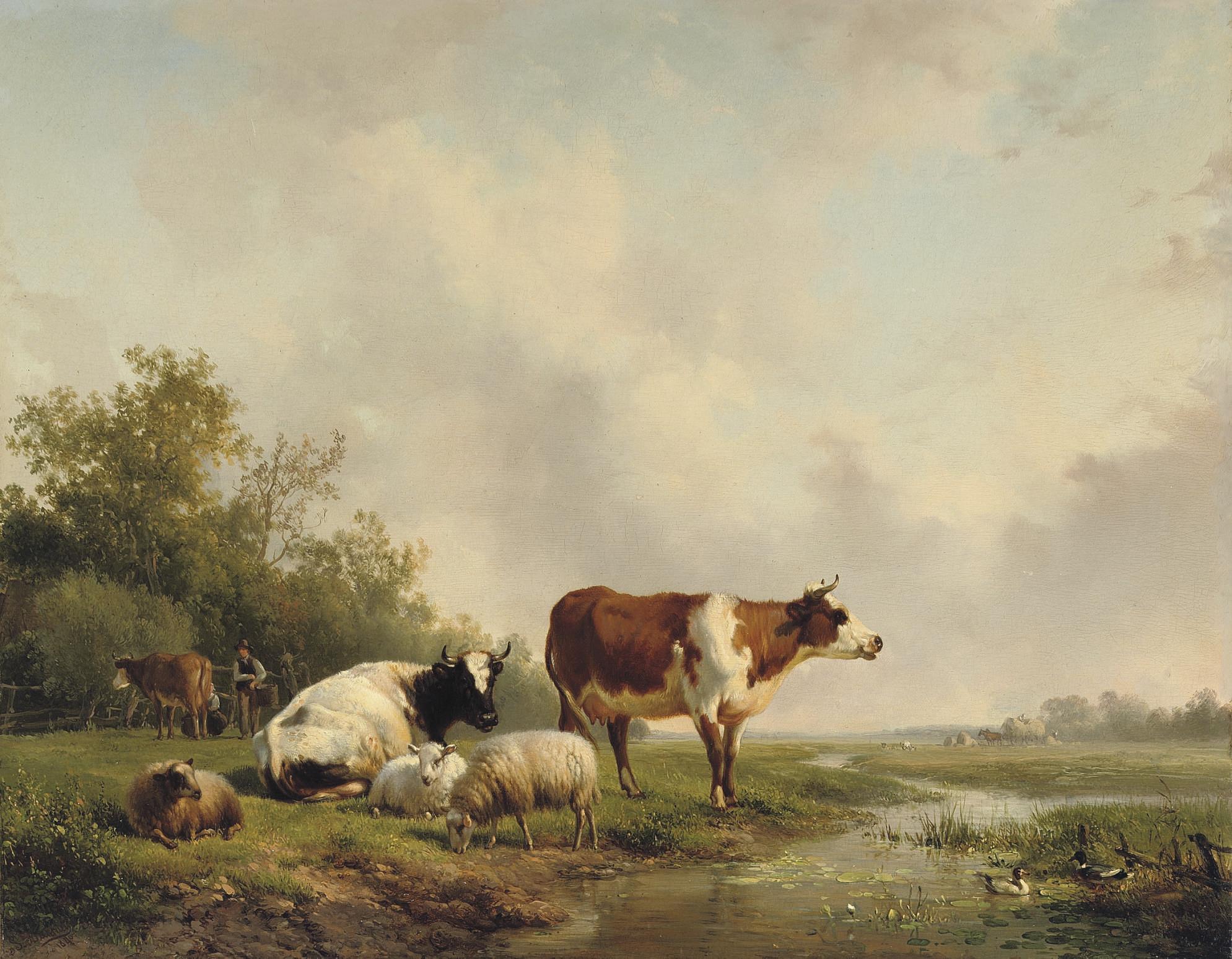 Resting cattle in a meadow