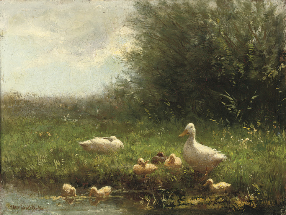 Ducklings on a riverbank