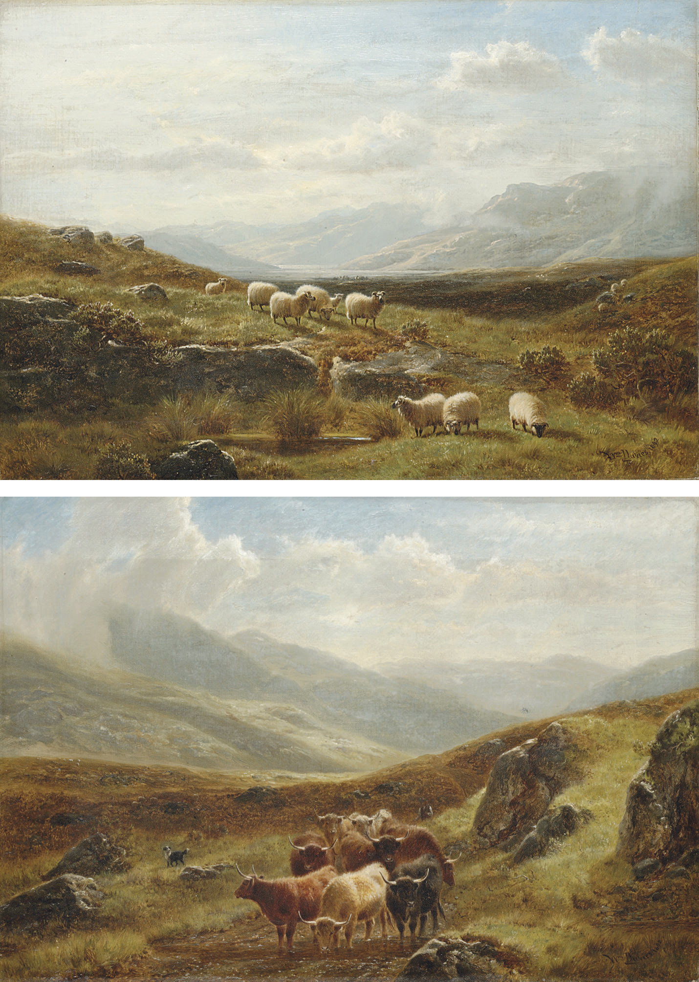Sheep grazing in a highland landscape; and Cattle watering in a highland landscape
