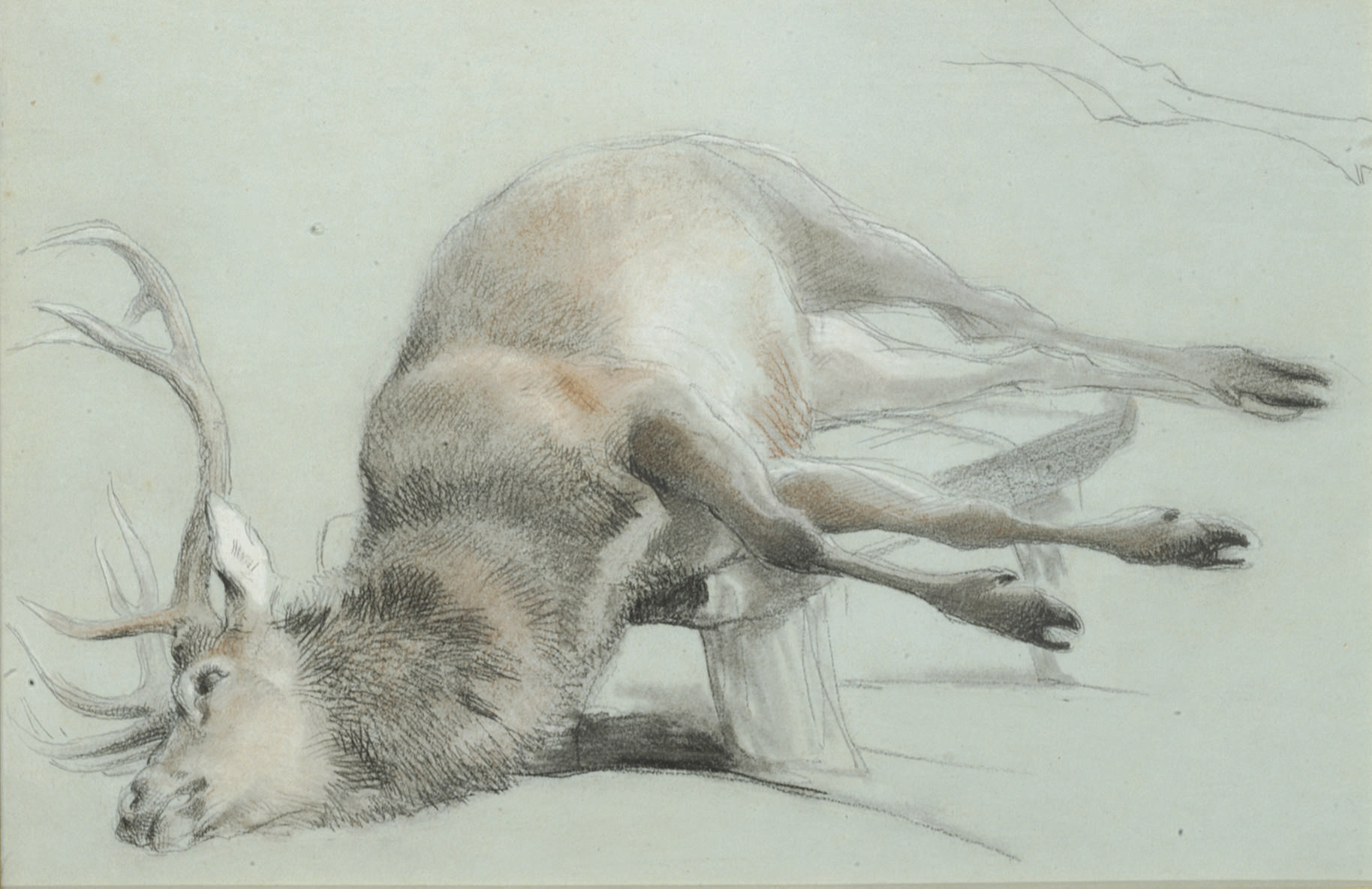 Study of a stag with a subsidiary study of the right hind leg