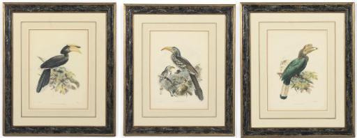 THREE FRAMED LITHOGRAPHS OF HORNBILLS