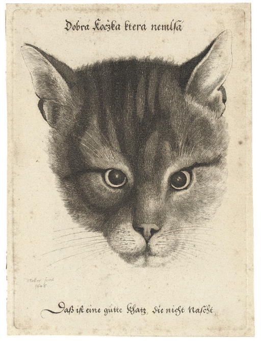 Head of a Cat (Pennington 2109)