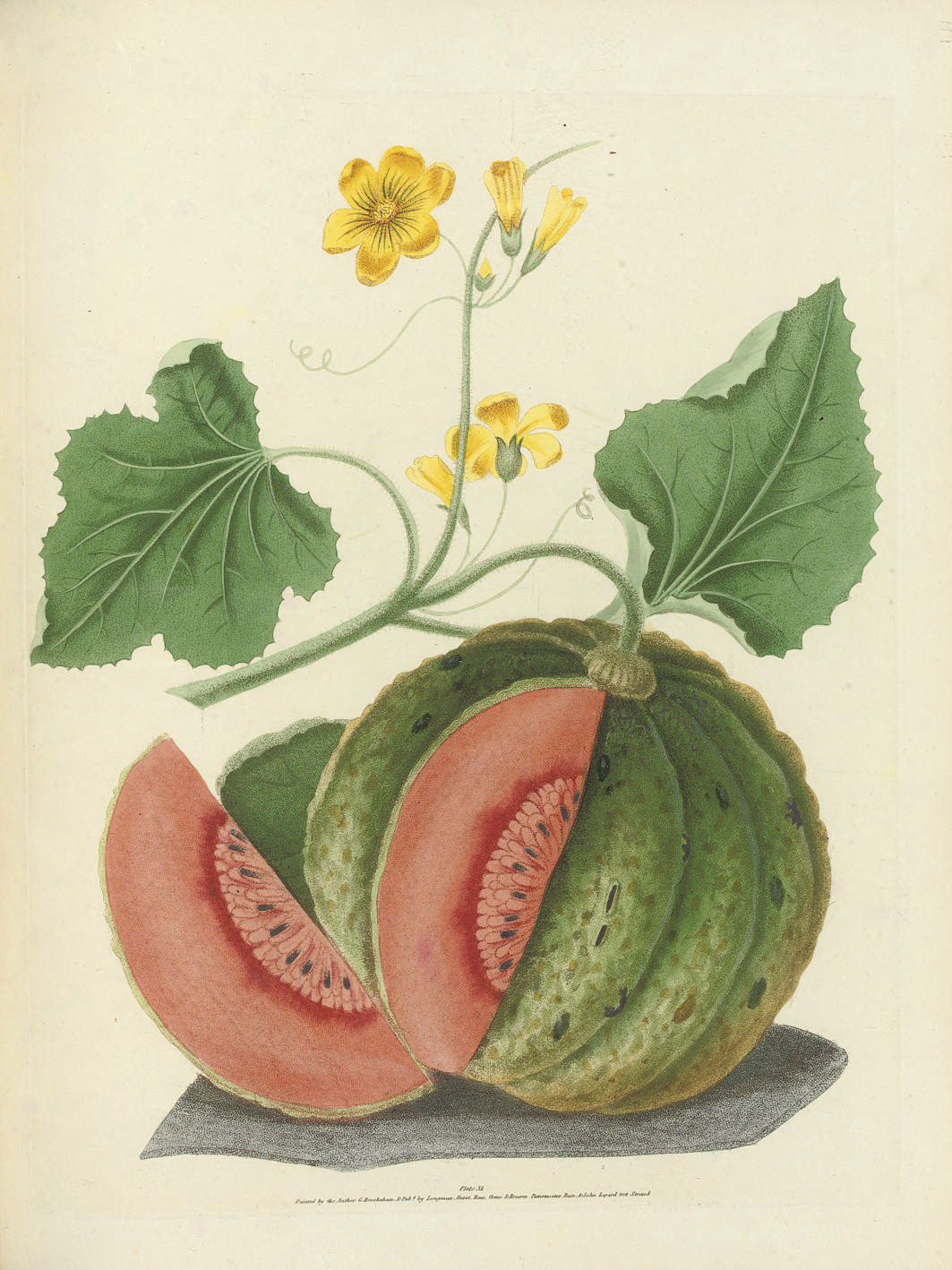 BROOKSHAW, George (1751-1823). Pomona Britannica; or, a collection of the most esteemed fruits at present cultivated in this country. London: T. Bensley for Longman, Hurst, Rees, Orme & Brown and John Lepard, [1816-]1817.