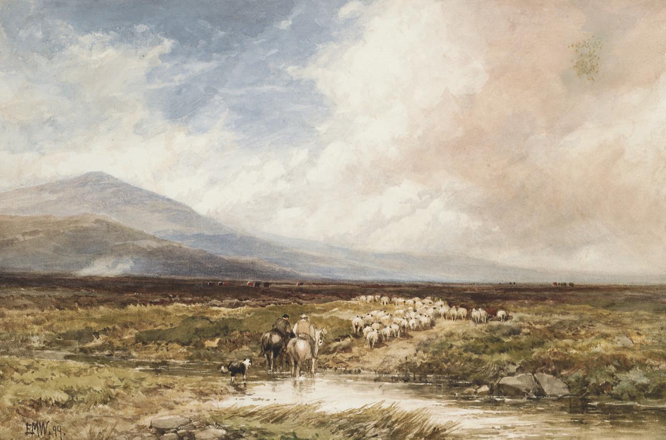 Driving home the flock, Dartmoor
