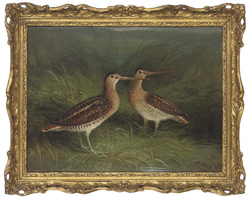 Snipe on the bank of a river