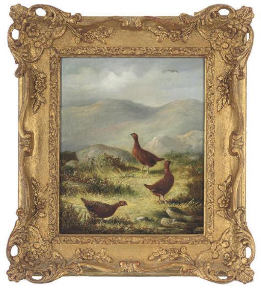 Three grouse on a grassy plateau
