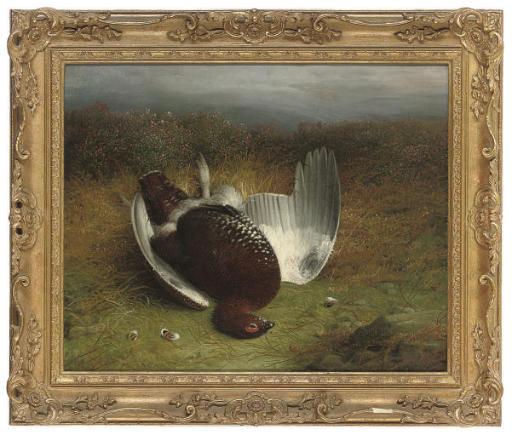 A dead grouse on a moor