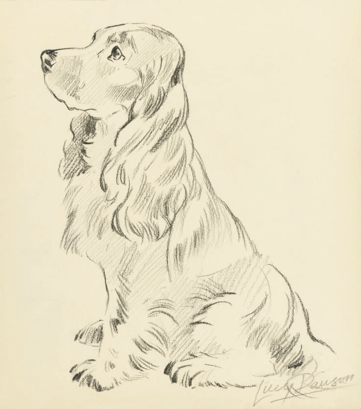 Five studies of dogs including: A cocker spaniel; and A terrier